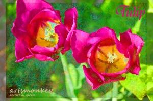 Tulipink3a copy