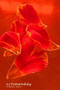 tulippetals08 copy