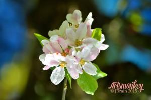 Blossom, Artsmonkey Photo